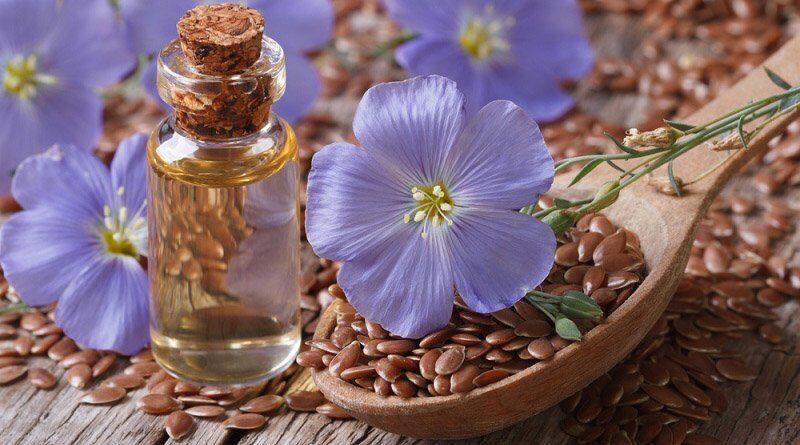 Лен: особенности растения, достоинства и применение ткани. Полезная информация о тканях от магазина Все ткани